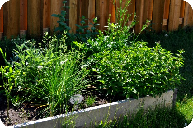 Raised-Bed-Herb-Garden